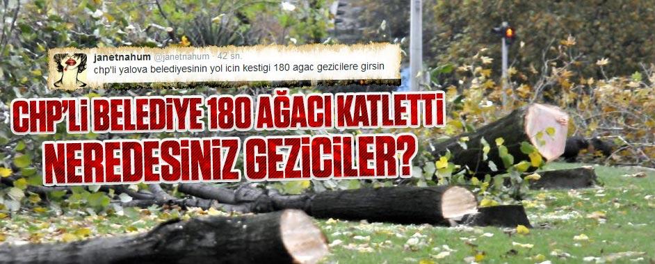 Neredesiniz Geziciler, CHP'li belediye 180 ağacı katletti!