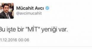 avci2
